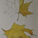 creion & culoare 13